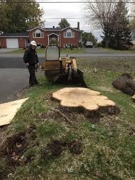 Emondage SBP pour l'élagage, l'émondage, le déboisement et l'abattage d'arbres
