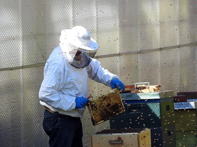 Se pourvoir en matériel pour devenir le meilleur des apiculteurs