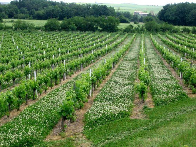 Quels critères de choix pour acquérir un vignoble ?