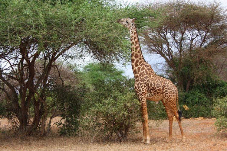 Les sites à visiter durant un voyage sportif au Kenya